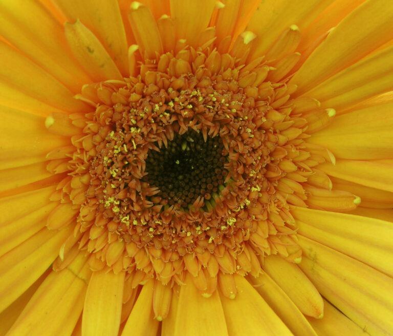 Monthly Wild Abundance Brunch & Worldwide Womb Blessing:   Aug 29th,